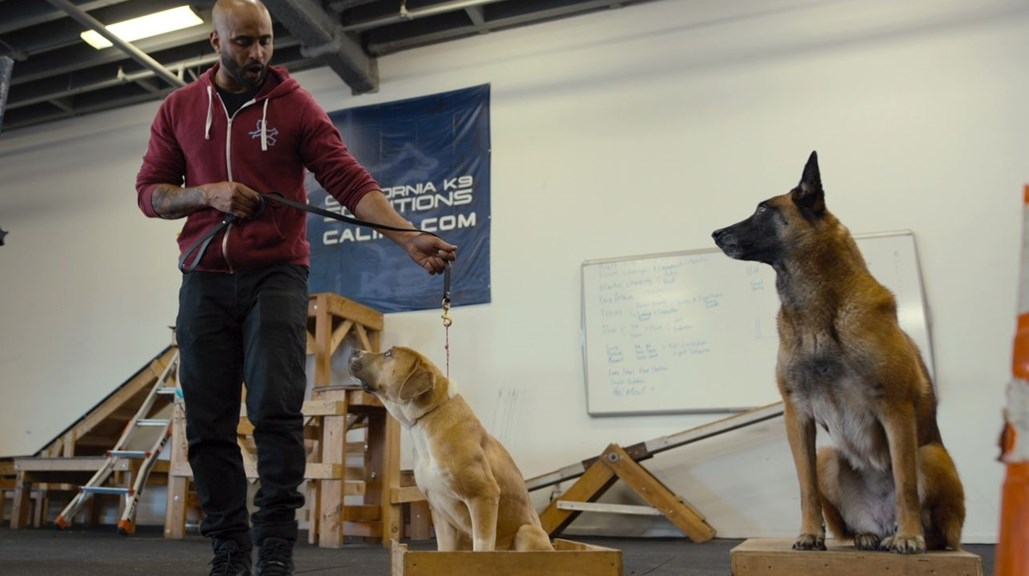 Canine Intervention & A. Smith & Co.'s Purposeful Entertainment Mission